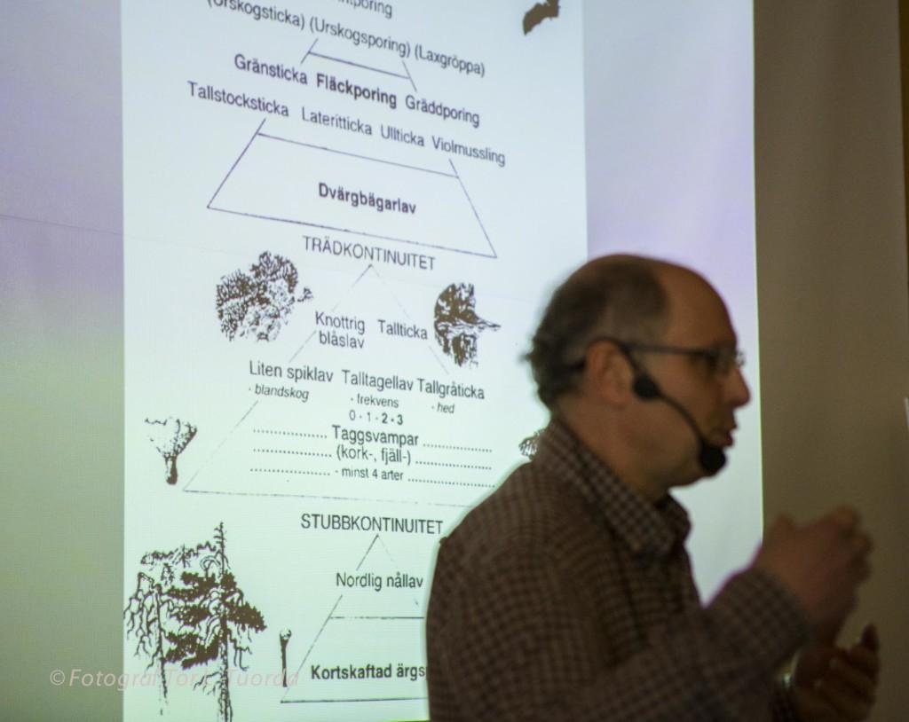Mats beskriver sin värdepyramid som gäller för tallskogar.